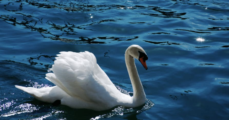 Royal Swan d'Ainsworth Gaming : un examen complet